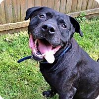 Adopt A Pet :: BK - Staten Island, NY