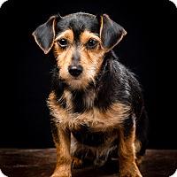 Adopt A Pet :: Jonsey - MEET HIM - Norwalk, CT