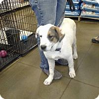 Adopt A Pet :: Dryden - El Paso, TX