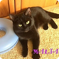 "Adopt A Pet :: Malia  ""I have a special adoption fee"" - Mooresville, NC"