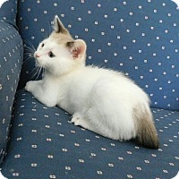 Adopt A Pet :: Dana - Davis, CA