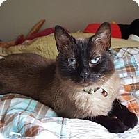 Adopt A Pet :: Yoshi - Barrington Hills, IL