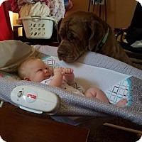 Adopt A Pet :: Captian Morgan - Goodyear, AZ