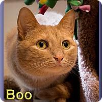 Adopt A Pet :: Boo (aka Boop) - Aldie, VA