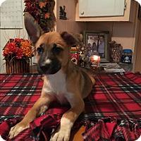 Adopt A Pet :: Lissa - Kittery, ME