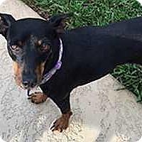 Adopt A Pet :: Lucy--Albany, GA - McDonough, GA