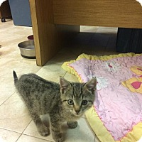 Adopt A Pet :: Nemo - Lancaster, PA