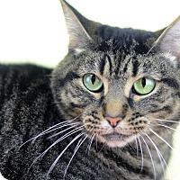 Adopt A Pet :: SNOOKS - LAFAYETTE, LA