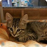 Adopt A Pet :: Paisley - Warrenton, MO