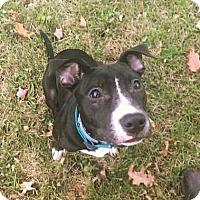 Adopt A Pet :: BOLT - Northeast, OH