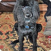Adopt A Pet :: Carter - Bay City, MI
