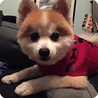 Adopt A Pet :: Rex - Alden, NY