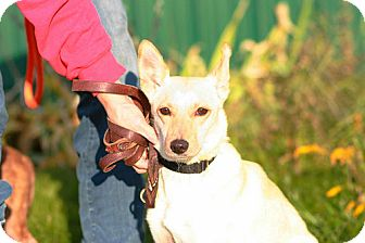 Terrier (Unknown Type, Medium) Mix Dog for adoption in Batavia, New York - Rescue Molly