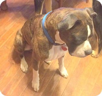 Boxer Dog for adoption in Pardeeville, Wisconsin - Tucker (boxer)