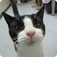 Adopt A Pet :: Augustus - Kingston, WA