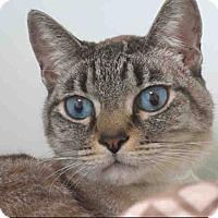 Adopt A Pet :: Elias - San Juan Capistrano, CA
