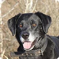 Adopt A Pet :: Bo - Doylestown, PA