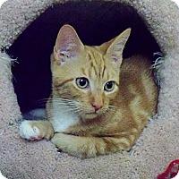 Adopt A Pet :: Hewy - Davis, CA