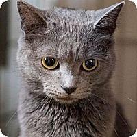 Adopt A Pet :: Smokey - Walnut, IA