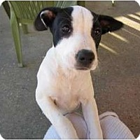 Adopt A Pet :: Sophia - Richmond, VA