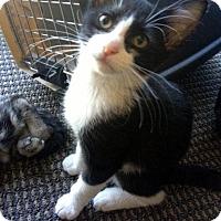Adopt A Pet :: McQuay - Chandler, AZ