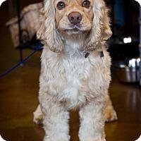 Adopt A Pet :: Joey - Orange, CA