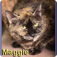Adopt A Pet :: Maggie - Aldie, VA