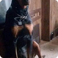 Adopt A Pet :: Johnny Cash Adoption Pending - East Hartford, CT