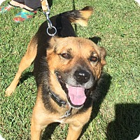 Adopt A Pet :: Emo - Providence, RI