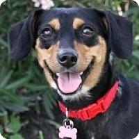 Adopt A Pet :: Nani - Houston, TX