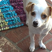 Adopt A Pet :: TWIGGY - Los Angeles, CA