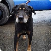 Adopt A Pet :: Joe - McKenna, WA