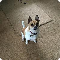 Adopt A Pet :: SPARKY - Upper Sandusky, OH