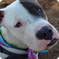 Adopt A Pet :: Brody - Maricopa, AZ
