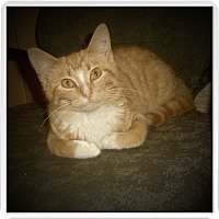 Adopt A Pet :: MERLE - Medford, WI