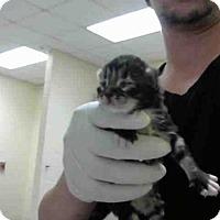 Adopt A Pet :: A276188 - Conroe, TX