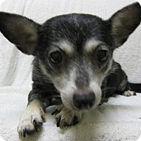 Adopt A Pet :: Ebony - Gary, IN