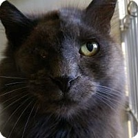 Adopt A Pet :: Sturgis - Fort Collins, CO