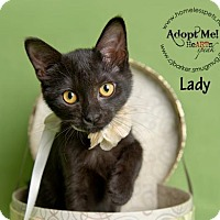 Adopt A Pet :: Lady - Houston, TX