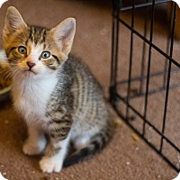Adopt A Pet :: Freddy - Morgantown, WV
