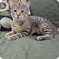 Adopt A Pet :: Expo - Hawk Point, MO