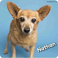 Adopt A Pet :: Nathan - Phoenix, AZ