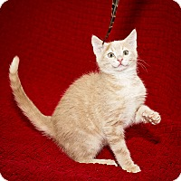 Adopt A Pet :: Timmy - Norman, OK