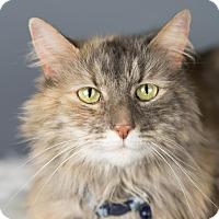Adopt A Pet :: Beth - Columbia, IL