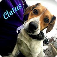 Adopt A Pet :: Cletus - Sparta, NJ