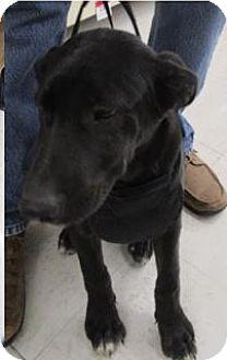 Labrador Retriever Mix Dog for adoption in Von Ormy, Texas - Toby