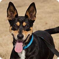 Adopt A Pet :: ButterCup - Lexington, TN