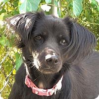 Adopt A Pet :: Jessica - Long Beach, NY