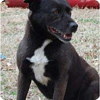 Adopt A Pet :: Prego - Wichita, KS