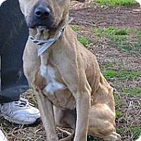 Adopt A Pet :: Ria - Athens, GA